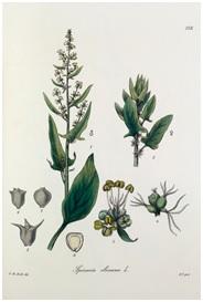 Herbs